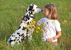 De opvoeding van uw Dalmatier