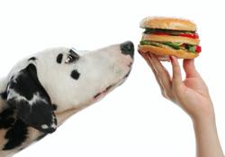 De voeding van een Dalmatier
